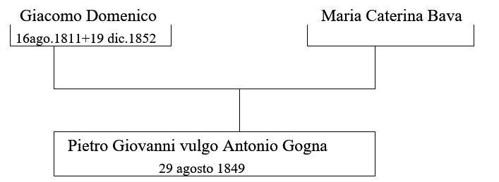 albero genealogico 2